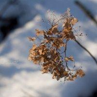Зимней цветок... :: Дарья