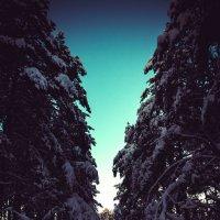 Дорога домой :: Элина Лисицына