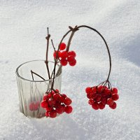 Зимняя композиция :: galina tihonova