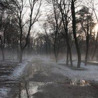 парк в дымке :: Алексей Брезгалов