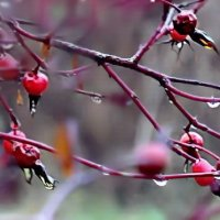 ...розовая осень.... :: Ира Егорова :)))