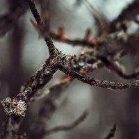 Жизнь по венам деревьев :: Сергей Пилтник