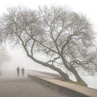 Двое в тумане :: Николай Климович
