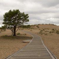 Тропа в дюнах :: Martta Aurinko