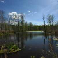 Лесное озеро летом :: Nikita Volkov