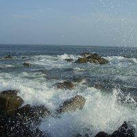 Японское море. Ливадия :: Анна Шитова