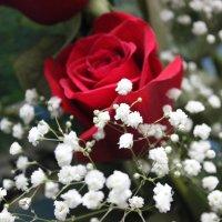 цветы :: Богдана Алексеева
