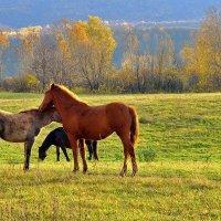 Разномастные кони :: Любовь Потеряхина