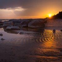 Отлив на заливе :: Александр Сергеев