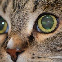 моя кошка :: Аркадий Алямовский