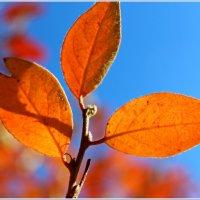 Осенние листья :: Иван Клещин