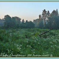 Рассветная поляна(2) :: Валерий Викторович РОГАНОВ-АРЫССКИЙ