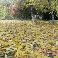 деревья дарят земле свои одеяния :: МИХАИЛ КАТАРЖИН