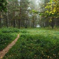 Осень в парке :: Лариса Кайченкова