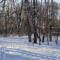 Зимнем парке. :: Юрий Шувалов