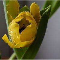 Весна в феврале :: galina tihonova