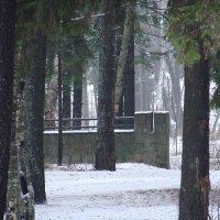 Заборчик в туманчике :: Владимир Гилясев