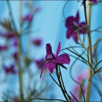 Цветы :: Ольга Бобкова