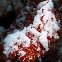 Снежок, снежок :: Александр