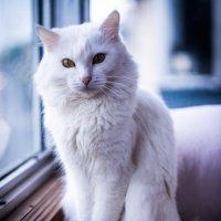 cat :: Никита Магсумов