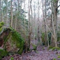 Зелёный февраль в Скандинавии :: liudmila drake