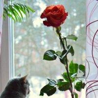 день святого Валентина :: Сергей