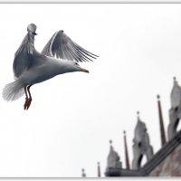 Воздушный танец :: Александр Назаров