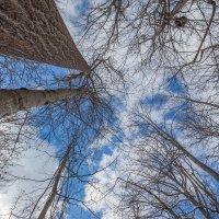 В небо :: Petr Shostak