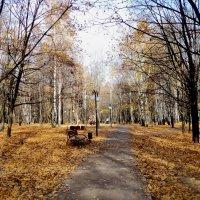 Осень в парке городском. :: Ольга Кривых