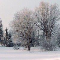 Зима, зима :: Александр