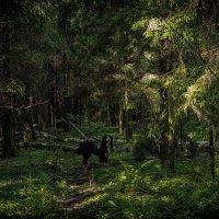 Прогулка в лесу :: Иван Чурин