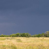 Перед грозой :: Андрей Студеникин