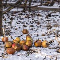Гнилые яблоки :: Евгений Углянский