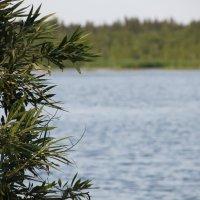Озеро :: Julie Shmidt