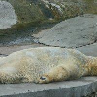 Спят усталые игрушки, мишки спят :: Наталья VolNa