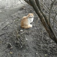 кот :: Юлия Закопайло
