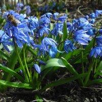 Вот такая весна !!! :: Lara