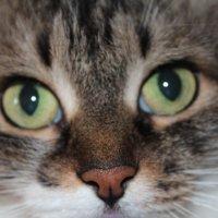 что то увидела кошка :: Олег Фролов