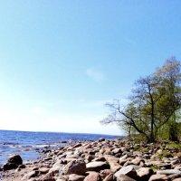 Финский залив :: Александр Лебедев