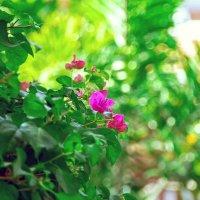 Природа Тайланда :: Olika Iva