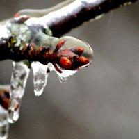 ### :: Снежана Орно-Орлова