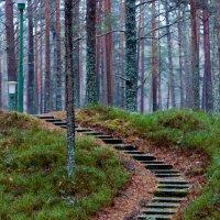 в лесу :: Диана Матисоне