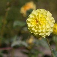 Цветы :: Валерий Павловский