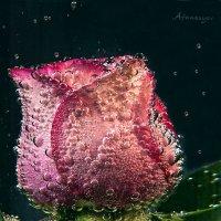 эксперименты с розой :: Антон Афанасьев