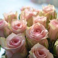 чудесные розы :: Zhanna Guseva