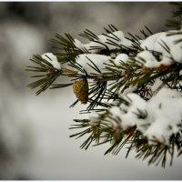 Зимой и летом... :: Василий Хорошев