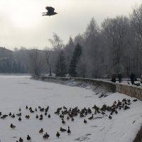 Великие Луки. Река Ловать. Февраль... :: Владимир Павлов