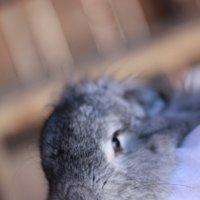 Funny Bunny #2 :: Sh.E.V. n/a