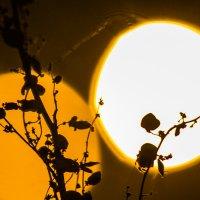Почти солнце...) :: Наталья Гранфельд