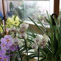 Оранжерея орхидей (2) :: Николай Ефремов
